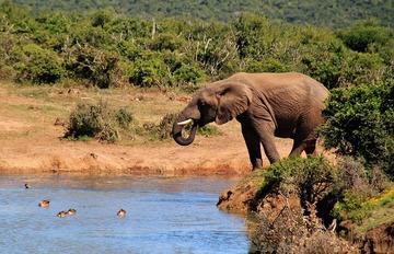 elephant-463279_640.jpg