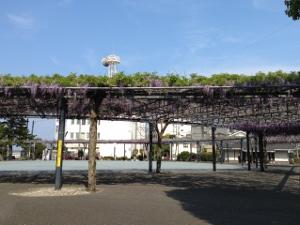 藤の広場.jpg