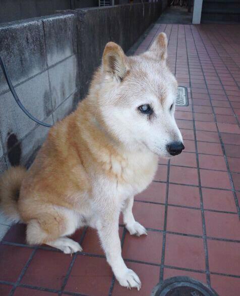http://blogs.bizmakoto.jp/toppakoh/53891.jpg